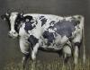Pasaulinis pieno tiekimas 2020 80x100